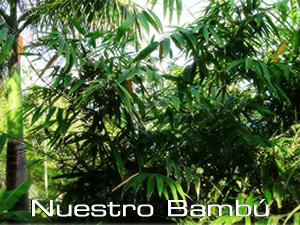 nuestro_bambu