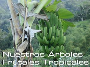nuestros_arbooles_frutales_tropicales