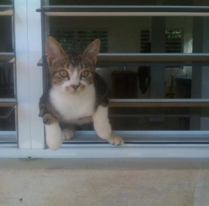 Sombra apareció sin más un día y nos ha estado visitando desde entonces.