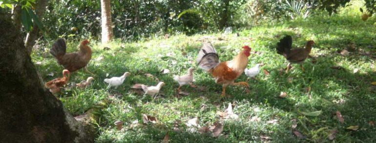 Representando Correctamente La Situación  De La Agricultura Sostenible En Puerto Rico